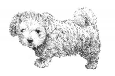 Poster black and white hand drawn puppy dog picture, adorable puppy dog sketch isolated on white background for vet, pet grooming salon, veterinarian pet care or pet shop business card clip art, brochure ads