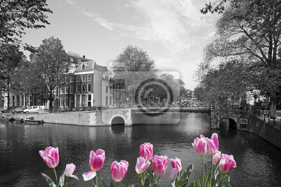 Black and white view of Amsterdam canal with pink tulips