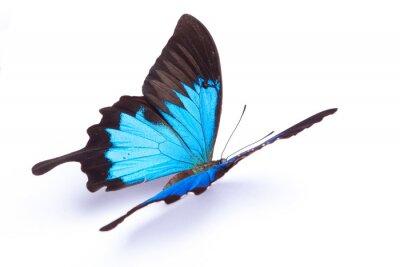 Poster Blau und bunten Schmetterling auf weißem Hintergrund