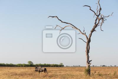 Blaue wildebeast und Baum