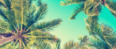 Poster Blauer Himmel und Palmen Blick von unten, Vintage-Stil, Sommer Panorama-Hintergrund