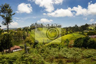 Poster Blick auf Teeplantage an den Hängen des Mount Kenya