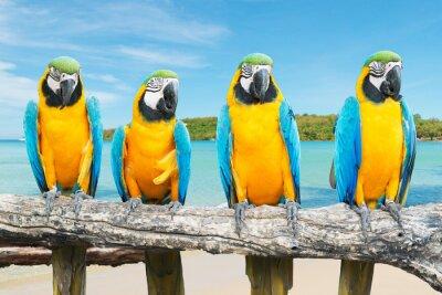 Poster Blue and Gold Macaw auf tropischen schönen Strand und Meer
