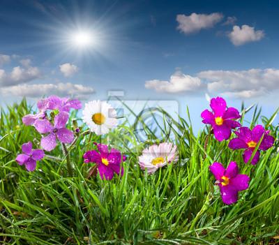 Blühende Wiese unter blauem Himmel mit Wolken