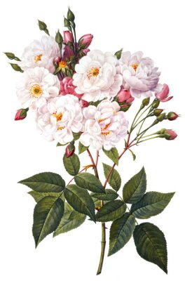 Poster Blume Illustration