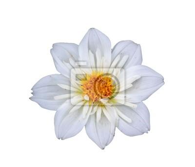 Blume kopf auf einem weißen hintergrund isoliert wandposter • poster ...