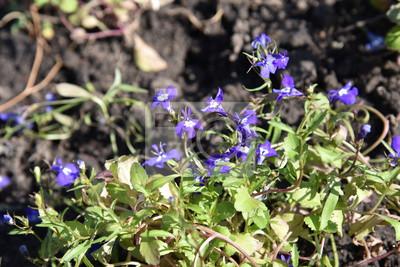 Retro Kühlschrank Violett : Blume natur lila frühling pflanze blumen grün violett