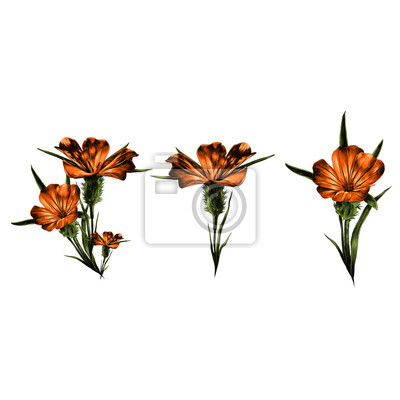 Blume skizze vektorgrafiken farbbild wandposter • poster Linie, Hand ...
