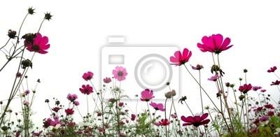Blume (Wald der Blumen)