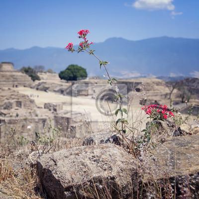 Blumen in Monte Alban Ruinen, Oaxaca, Mexiko