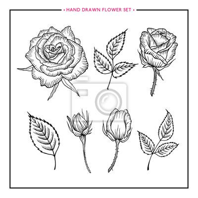 Blumen-set rose. hand gezeichnet rose. rose skizze. blume stieg ...
