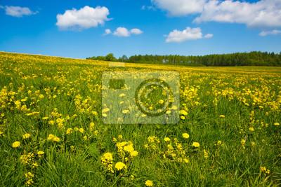 Blumenwiese Und Den Blauen Himmel Hirten Panorama Der Natur