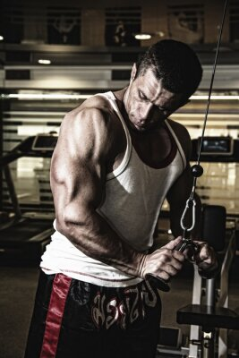 Poster Bodybuilder trains the muscles in the gym
