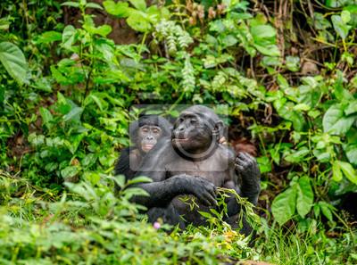 Bonobomutter mit einem Baby auf einem Hintergrund eines tropischen Waldes. Demokratische Republik Kongo. Afrika.