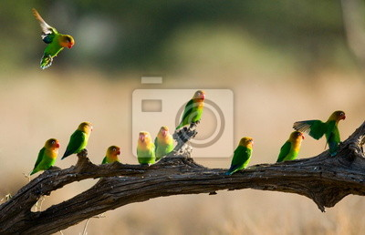 Bright bird on a branch.