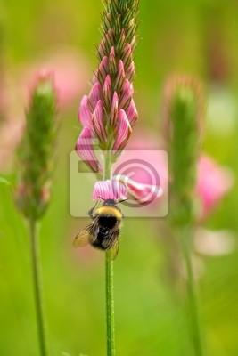 Bumble Bee auf einer wilden Wiese Blume