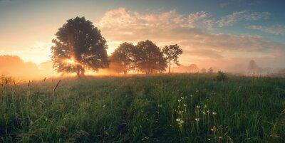 Poster Bunte Frühling Sonnenaufgang auf der Wiese
