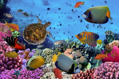 Poster Bunte Korallenriff mit vielen Fischen