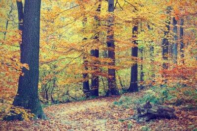 Poster Bunter Herbst Bäume im Wald, Vintage-Look