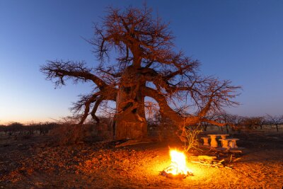 Campfire at campsite under large baobab tree after sunset