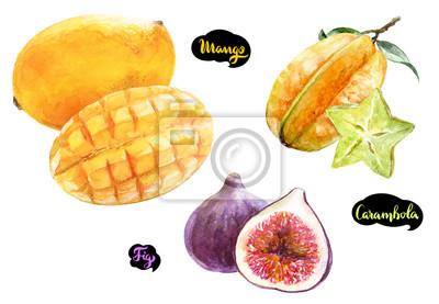 Poster Carambola Mango Feigen Aquarell