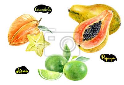Poster carambola papaya lime watercolor