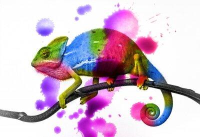 Poster Chamäleonfarben