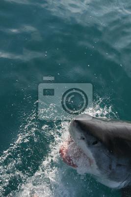 Chomping Shark