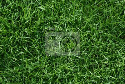 Poster Clean green grass