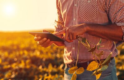 Poster Close up of farmers hands with tablet on soybean filed at sunset.