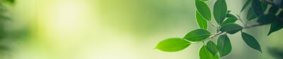 Poster Closeup nature view of green leaf on blurred greenery background in garden with copy space for text using as summer background natural green plants landscape, ecology, fresh cover page concept.