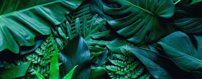 Poster closeup tropical green leaf background. Flat lay, fresh wallpaper banner concept