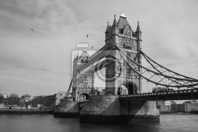 Colombe sul Tower Bridge