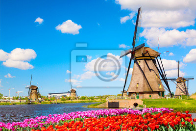 Poster Colorful spring landscape in Netherlands, Europe. Famous windmills in Kinderdijk village with a tulips flowers flowerbed in Holland. Famous tourist attraction in Holland