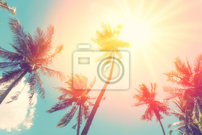 Poster Copy space of tropical palm tree with sun light on sky background.