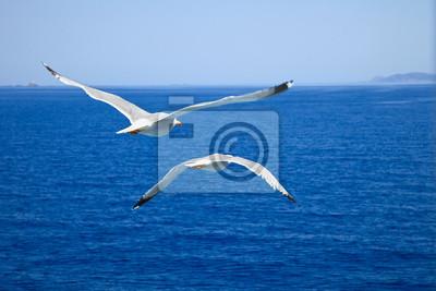 Das Fliegen von Möwen über blauem Wasser Hintergrund