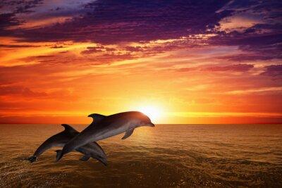 Poster Das Springen von Delfinen