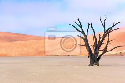Dead Vlei, Sossusvlei, Namib Wüste, Namibia, Afrika