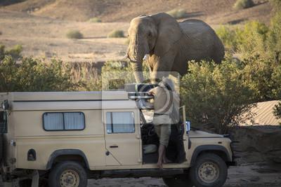 Desert Elephant in der Nähe von Purros, Namibia.