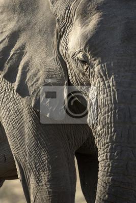 Details eines Elefanten weiden lassen.