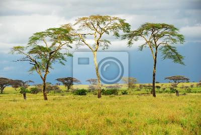 Die Bäume werden in der Savanne steht nach regen