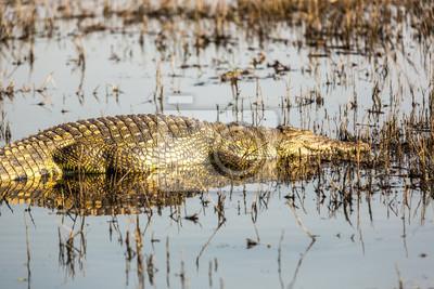 Die faszinierende Tierwelt im Chobe Nationalpark Botswana