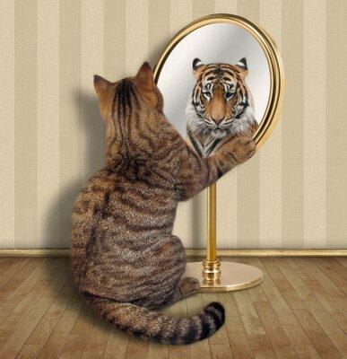 Die Katze Betrachtet Sein Spiegelbild Im Spiegel Es Sieht Dort