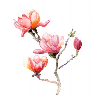 Poster die magnolia Aquarell isoliert auf den weißen Hintergrund