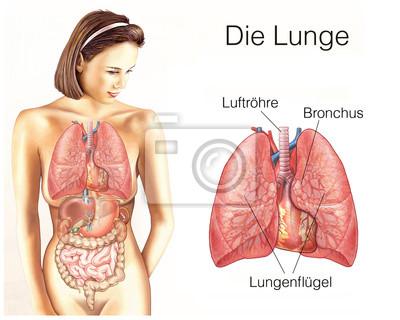 Die menschliche lunge mit lungenflügeln wandposter • poster ...