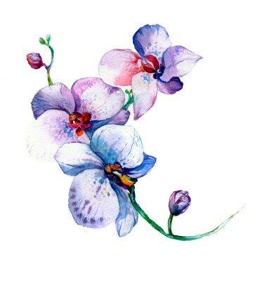Poster Die neue Ansicht der Orchidee Aquarell Hand gezeichnet für Postkarte auf dem weißen Hintergrund isoliert