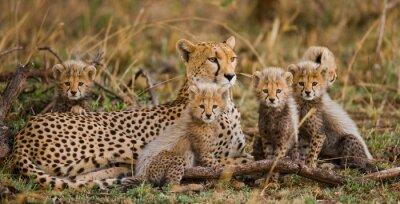 Die weiblichen Geparden mit ihren Jungen