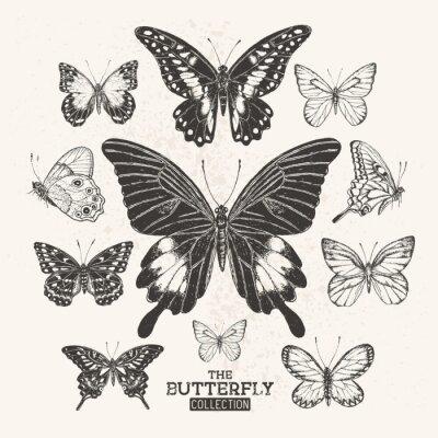 Poster Die Weinlese-Schmetterlings-Sammlung