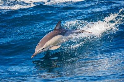 Poster Dolphin springen außerhalb des Meeres