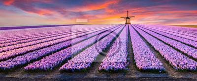Poster Dramatische Frühlingsszene auf der Blumenfarm.